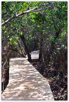 Eleuthera mangrove boardwalk