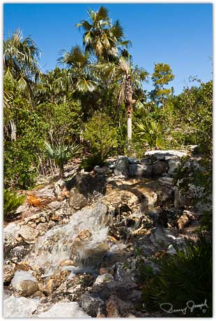 Eleuthera Native Plant Preserve Waterfall