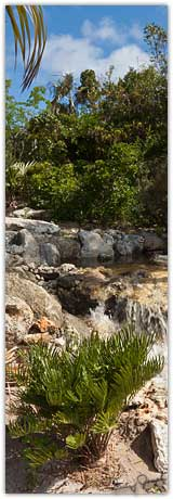 Eleuthera Plant Sanctuary Waterfall
